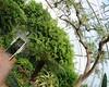 My Semitropical World is turning upside down (nosha) Tags: newjersey nj conservatory greenhouse destroyed dorisduke ddcf indoorgardens savedukegardens 100placesusa dorisdukecharitablefoundation joanesperopresident nannerlokeohanechair johnjmackvicechair harrybdemopoulos anthonysfauci jamesfgill annehawley peteranadosy williamhschlesinger johnhtwilson johnezuccotti