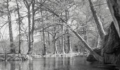 Krause Springs (Barb McCourt) Tags: krausesprings spicewoodtexas spicewood water rope trees people blackandwhitephotography blackandwhite bnw bw nikond7200 nikon