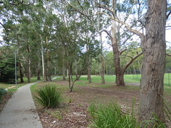 Boronia Park, Epping NSW 15 Feb.2017