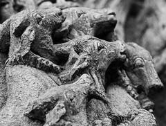 Belur_Cows (Swaminathan Natarajan) Tags: hoysala india canon canon550d karnataka historic architecture stone art travel photography travelphotography