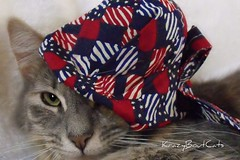 Cool Cat... (KrazyBoutCats) Tags: cats pets animals kittens felines