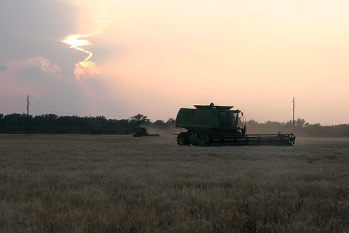Combining at dusk