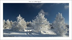 Mont Aigoual (Gard) (Michel Seguret thanks you all for + 7.700.000 view) Tags: schnee trees winter snow france cold art nature season landscape fun nikon flickr artist arte kunst postcard hiver ciel arbres pro sensational invierno neige michel nuage paysage inverno froid frio languedoc naturesbest gard temporada artiste mbp languedocroussillon smrgsbord photographe saison observatoire cartepostale occitanie seguret nikond200 stagione baumen flickrsbest aigoual kartpostal amazingcapture francelandscapes thisphotorocks mostbeautifulpicture internationalgeographic dragongoldaward thebestofday gnneniyisi worldtrekker thebestoftheday checkoutmynewpics cielnuage gnnenlyisi overtheshot flickrovertheshot momentdimagination flickrpopularphotographer croquenature mbpictures mostbeautifulpictures michelseguret