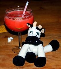 Un bon drink pour fêter le retour