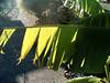 Foilage Banderole (Dead  Air) Tags: thanksgiving sunlight plant portland leaf banner stjohns sidewalk balance foilage excellence yougotit plus4 plus4excellence invitedphotosonlyplus4