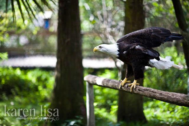 Busch Wildlife Sanctuary
