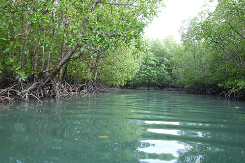 Waterway in Mangrove Forest