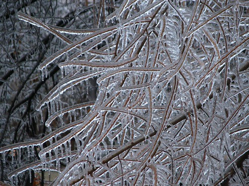 Tangled Branches and Ice