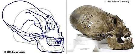 skull1c