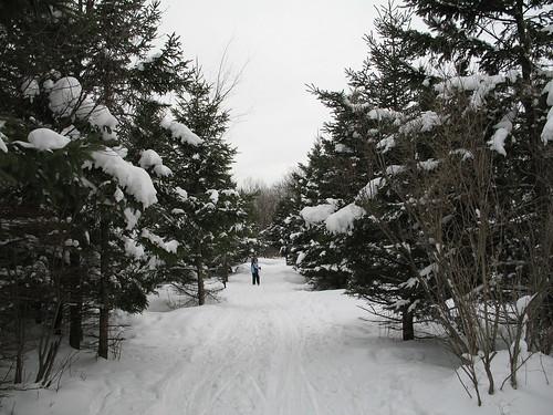 Skiing ahead