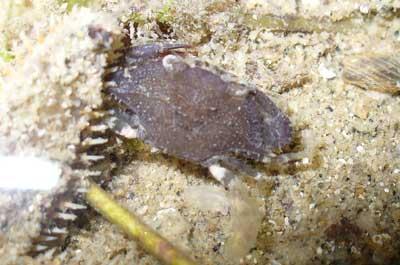 Crab-P1050489