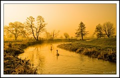 Misty Morning Sunrise. (numanoid69) Tags: trees mist cold ice water sunrise river landscape dawn swan stream frost freezing gloucestershire daybreak icey riverfrome avision whitminster nikond300