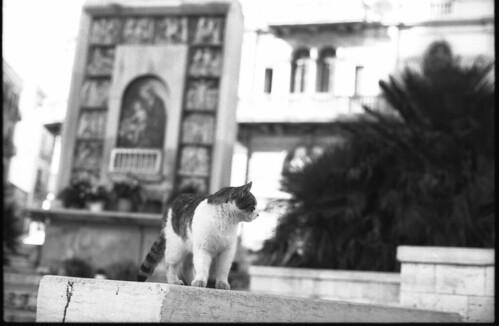 un gatto della madonna