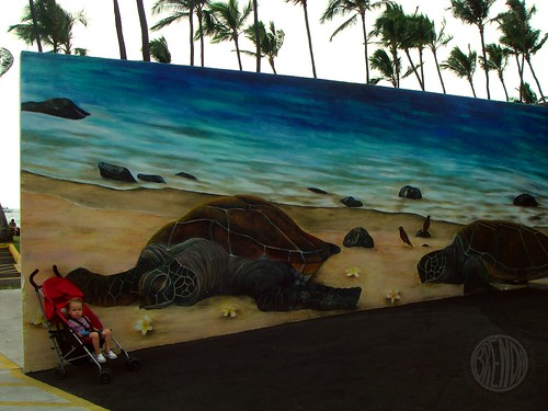 turtle wall