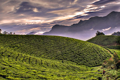 Walking trough the plantations.. (srini_g2003) Tags: sunset sky mountains green colors clouds tea munnar plantations naturesfinest goldstaraward thegalleryoffinephotography