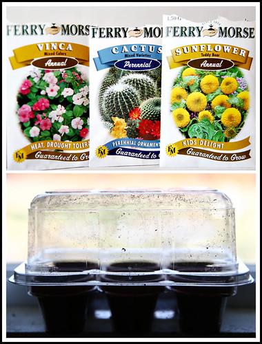 .mini greenhouse.
