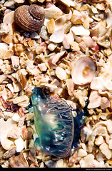 life in all its forms (akshath) Tags: life trip blue sea shells fish monument st canon dead island 350d sand village south mary shell national bones jelly forms arabian karnataka isles southindia udupi malpe geological stmarysisland akshath akshathkumarshetty