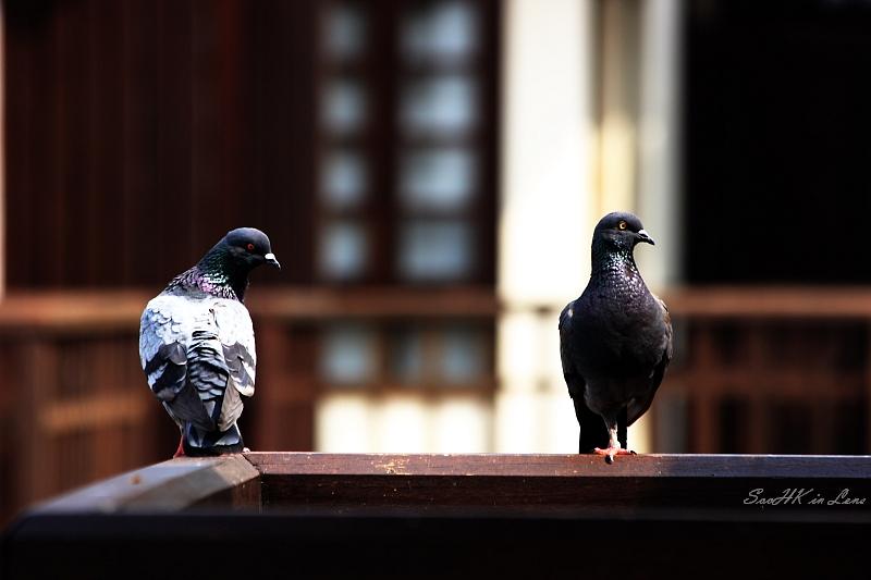 Birds @ Avillion Port Dickson
