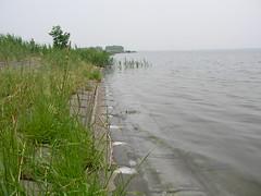 プランクトン性の泡がぷくぷく、水底は藻でつるつる。