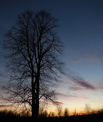 IMG_0029Cr lone tree at sunset (jgagnon63@yahoo.com) Tags: barkriver deltacountymi sundown sunset tree