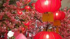 Red (Bonsailara1) Tags: bonsailara1 rojo red lamparasdepapel paperlamp spring flowers newyear chinese lunar añonuevo chino