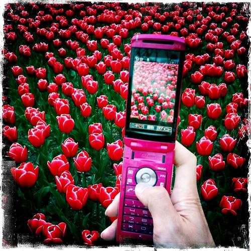 Tulip~