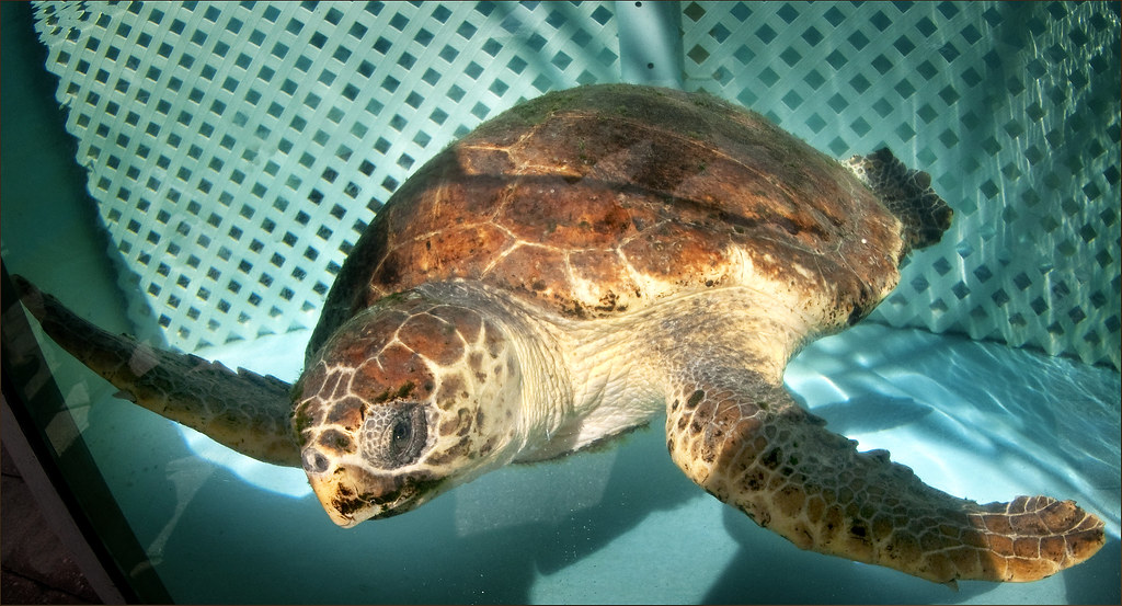 Loggerhead Marine Life Center