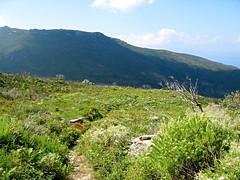 Le sentier de montée à Bocca di San Giuvanni