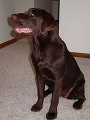 Dakota: Show Me Dog Command Pose