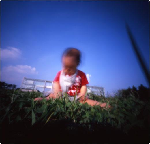 初めての芝生(1)