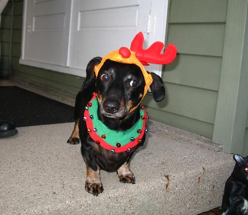 Hallowe'en 2007: the Hoont in costume.