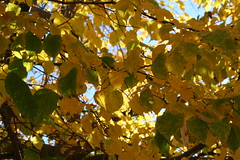 Fall is here ... (kcmerrill) Tags: colors leaves creek cherry colorado saturday denver hike changing