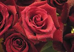 Rosa © ™ JGyL ®