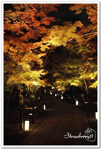 20071121京都永觀堂夜楓(14)