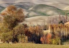 Colours of Toscana-DSC08133 (Giuseppe Toscano) Tags: italien italy landscape tuscany toscana landschaft toskana