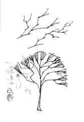 liquidChroma - Drawing, Sketch of Realistic Tree Limbs 2