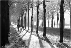 Rijp en zon in Almere (1) (Alex Verweij) Tags: winter bw dog sun sunlight mist cold fog walking licht nevel freezing zon almere canon400d anawesomeshot filmwijk coolestphotographers justhitmewithyourbestshot5thplaceseptember2008photocontest