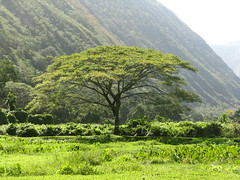 Hawaii 2008 291 (Normand et Guy) Tags: valley waipio