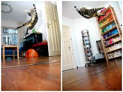 Zondagmiddag / Sunday afternoon (JeroenJeroen) Tags: playing cat jumping kat flash d70s pixel poes flexible muis spelen meandthekidwerebored