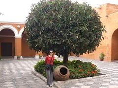 all'ingresso del monasterio (antonde) Tags: peru arequipa santacatalina
