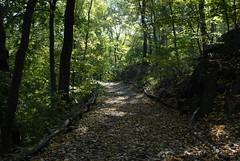 Shadowy Forest Walk