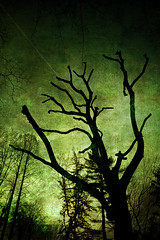 Sleepy Hollow (Philipp Klinger Photography) Tags: park tree texture silhouette germany deutschland moody hessen frankfurt sleepy philipp hollow creep hesse klinger grneburg dcdead