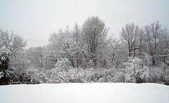 Snow 32808b