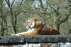 Longleat Safari Park #46