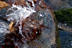 Just Like Water (Emmy Gee) Tags: brown cold green water leaves d50 leaf moss rocks stream splash