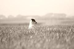 fidel fa il canguro (Matteo Maggini) Tags: animalandinsect