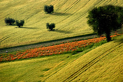 (raffaphoto©) Tags: trees italy nature landscape spring bec soe marche coutryside naturesfinest contry abigfave anawesomeshot impressedbeauty diamondclassphotographer flickrdiamond ysplix theunforgettablepictures obq