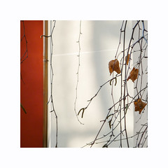 Petite pause (hélène chantemerle) Tags: branche bâtiments extérieur façades feuillesmortes murs ombres photosderue rue soleil urbain blanc orange jaune twigs city building walls sun shadows street white yellow