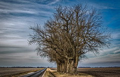 Line Of Oaks (myoldpostcards) Tags: rural country landscape oak trees rahman street st road rd menardcounty centralillinois illinois il unitedstates myoldpostcards randy randall vonliski season winter sky clouds atmosphere day contrast shadows lineofoaks canon eos 7dmarkii