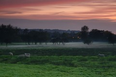 Sunset with Sheep (andrew.stuart1) Tags: light sunset mist beautiful grass canon eos amazing sheep hills leek staffordshire stoke 30d rollingin